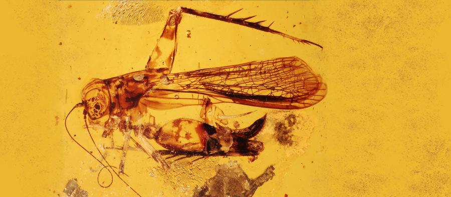 Naši vědci našli vjantaru hmyzí souputníky dinosaurů