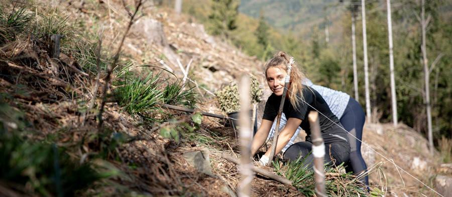 Jak jsme sadili bukový les naúpatí Javorového vrchu