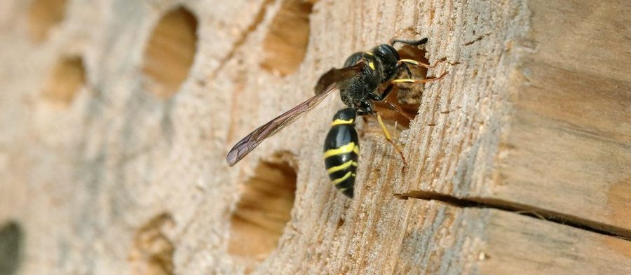 Hmyz je fajnovy, dostaňme ho doměsta více!